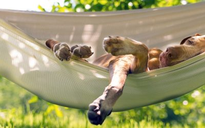 Summer tips for happy pets